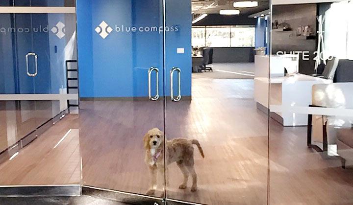 marketing agency dog