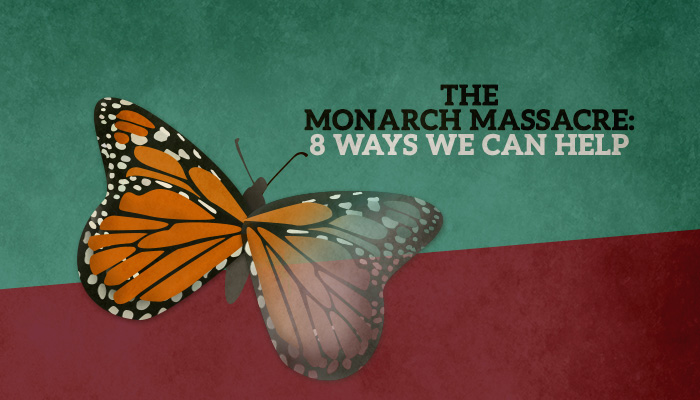 The Monarch Massacre: 8 Ways We Can Help
